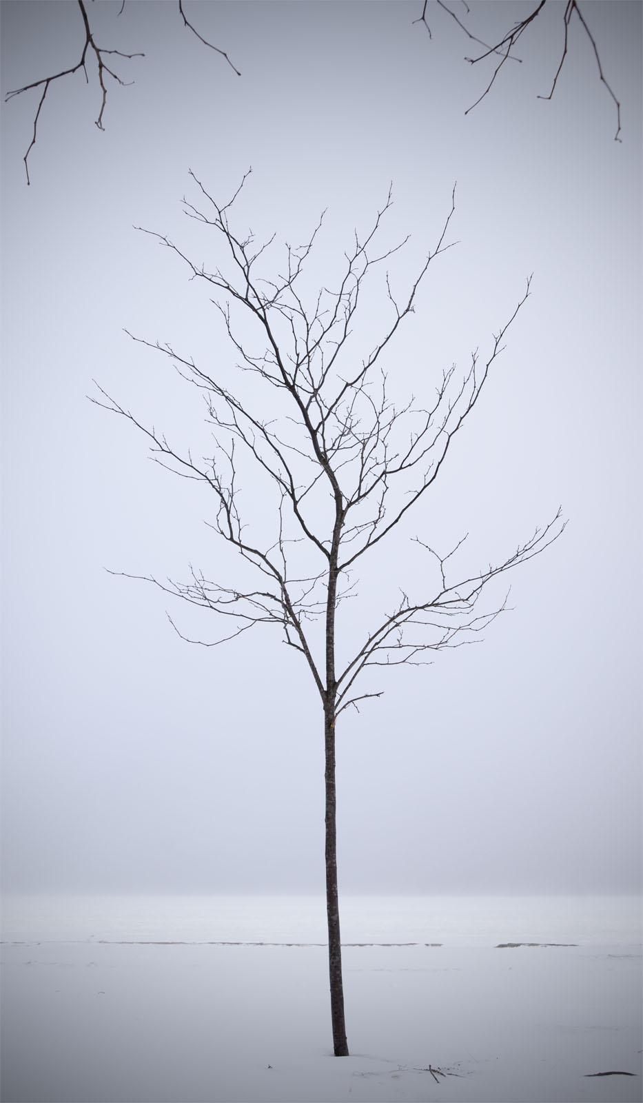 _DSC9031-a tree in snow.jpg
