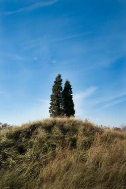 two tree-2010.jpg