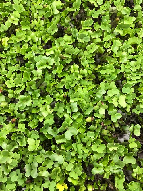 Salad Mix (Broccoli, Cabbage, Kohlrabi, Kale, Arugula)