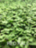 Red Kale.jpg