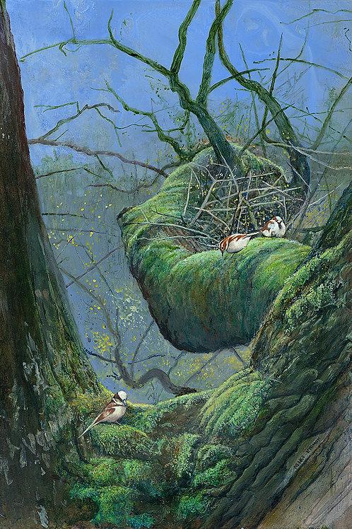 Moss Birds II
