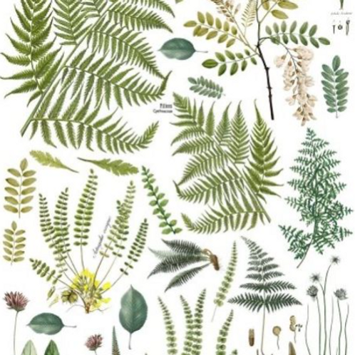 "Fronds Botanical 24"" by 33"" Transfer"