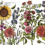 IOD-DT-Botanists-Journal-24x33.jpg