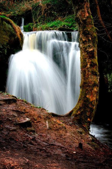 Tree and Waterfall (Small).jpg