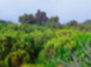 landscape-2009328_1920.jpg