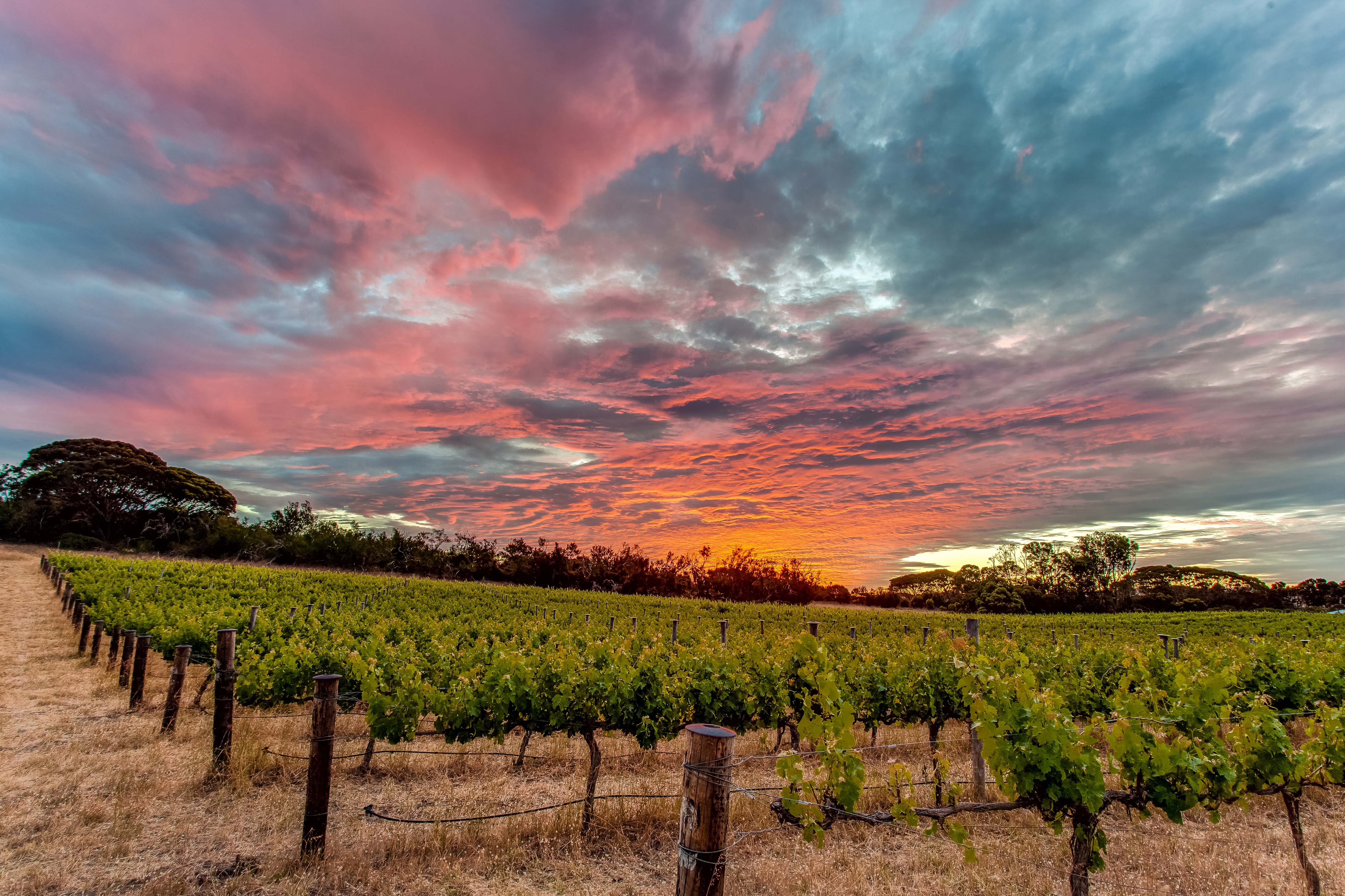 Vineyard_Chapman River