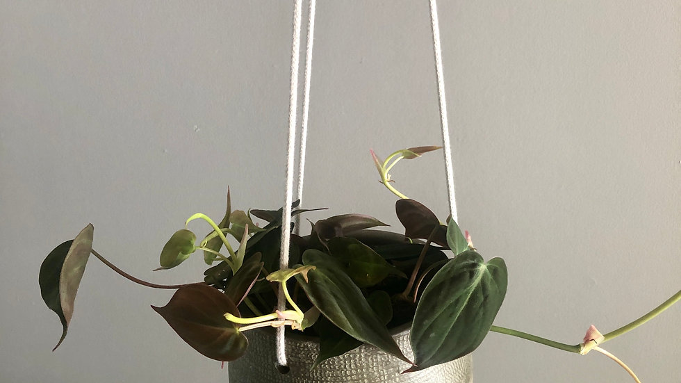 Pozzo Hanging Planter