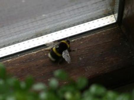 Bumbling Bees…..