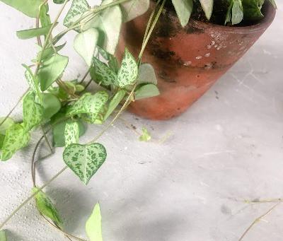 My Top 5 non-toxic houseplants