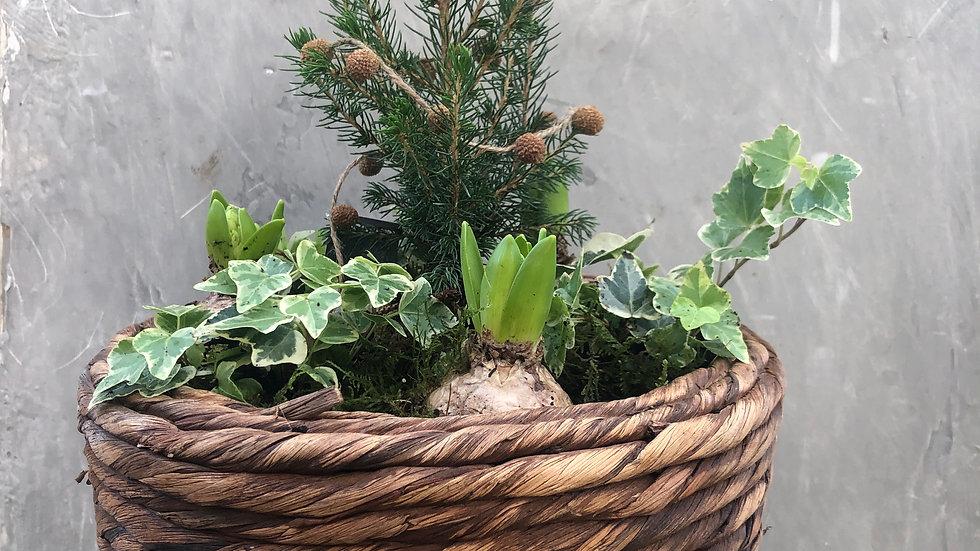 Natural Christmas planter