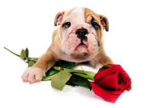 Don't end up in the Dog House this Valentine's Day – Monday 14th February!