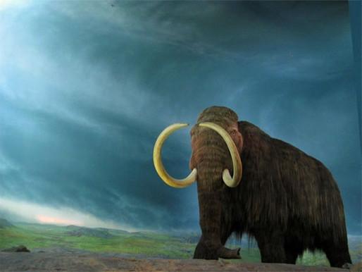 Empresa anuncia US$ 15 milhões para trazer à vida um mamute extinto há 10 mil anos