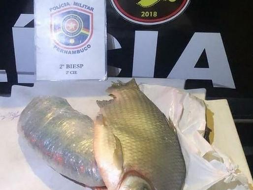 Homem é preso em Petrolina com cerca de 1kg de maconha escondida dentro de um peixe