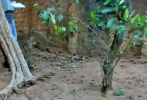 Mulher se enforca em árvore no quintal da própria casa; marido encontra corpo pendurado