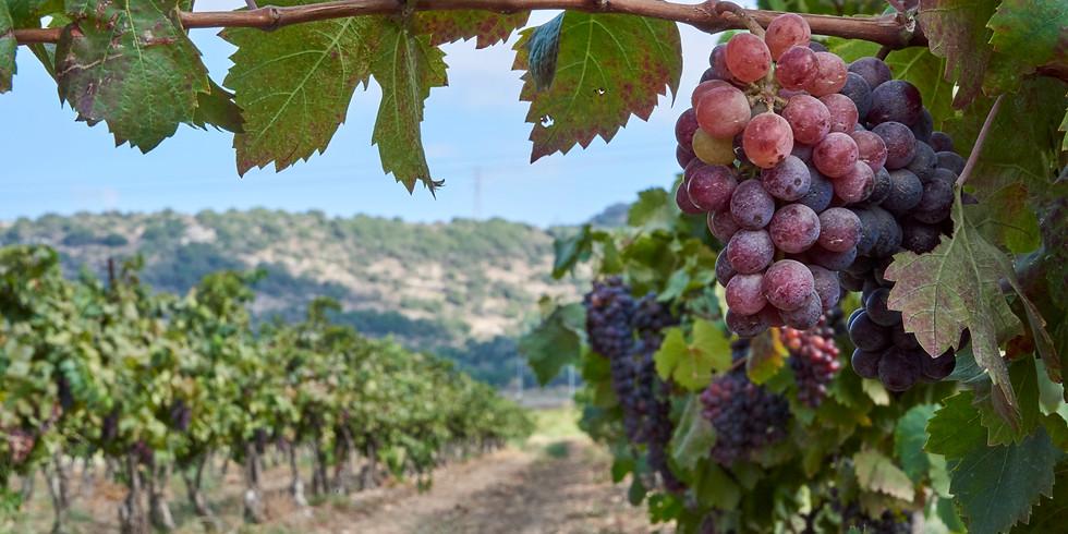 """Виноделие Израиля глазами туриста """"Что? Где? Почем?"""""""