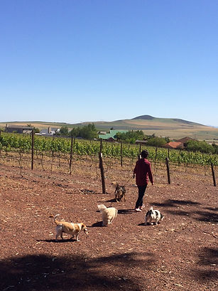 Artist walking in the vineyard