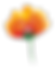 Flower 8.png