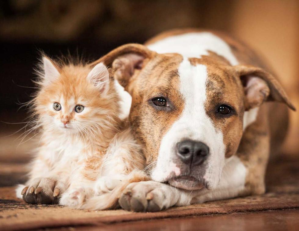 Cat-Dog-Home1.jpg