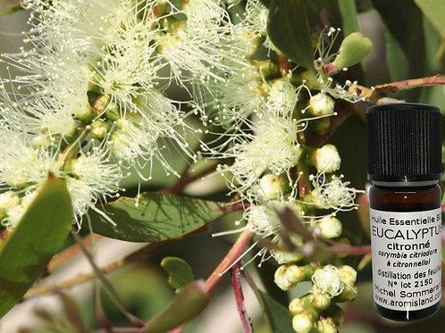 Eucalyptus citronné bio