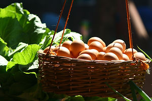 basket-filled-with-poultry-eggs-1625385.