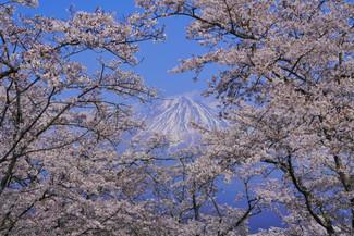 CBKKE7252-2『日本の春』.jpg