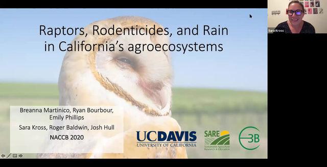 Video: Raptors, rodenticides, and rain