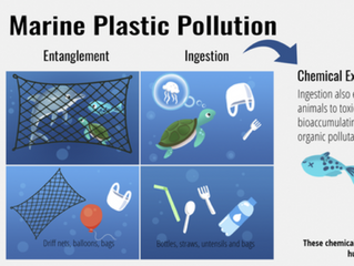 The United States requires effective federal policy to reduce marine plastic pollution