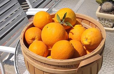 Large Navel Oranges in a Basket