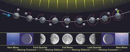 moon phase oak 4.jpg