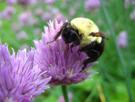 Busy as a Bee -- or not?