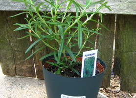 Give Them Tough Love: Hardening Off Your Herb Transplants
