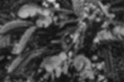 BC-34.jpg