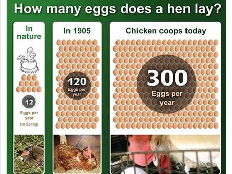 Huevos. ¿Por qué no?