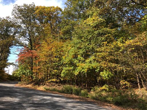 Dorchester Road