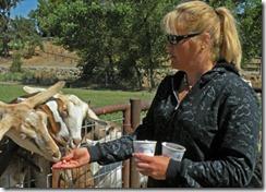 Happy Acres Farm - A Family Affair