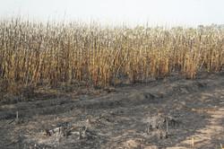 Verbrand rietveld