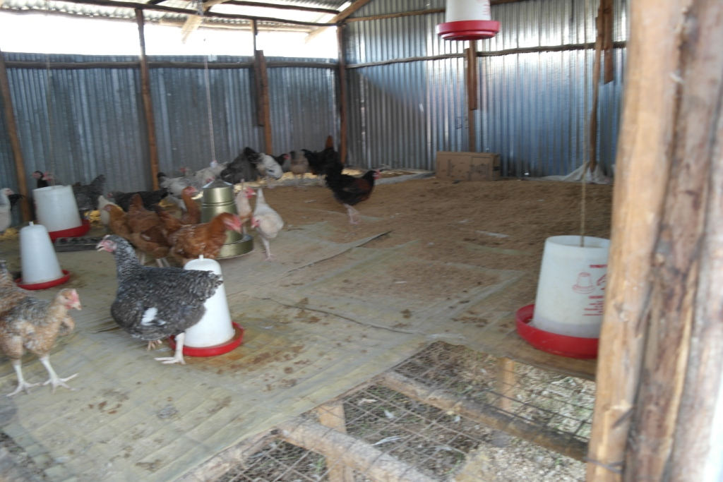kippenhok op verhoging