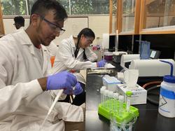 Testing Antibacterial Properties of DNA-AgNCs and AgNPs
