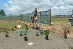 Planting To Mask Sewage System