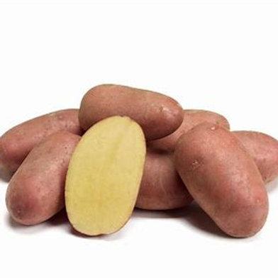 Aardappel rood 'Carolus' 1kg