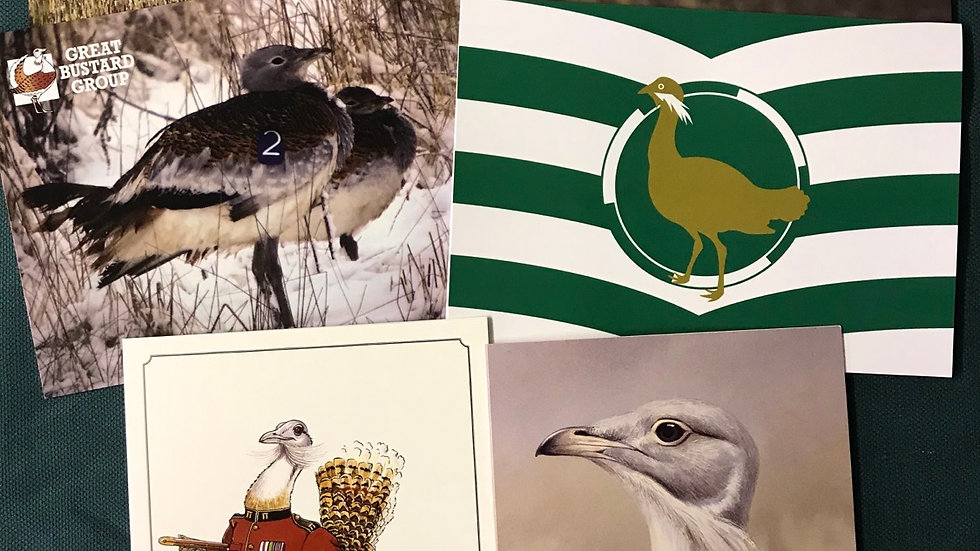 Great Bustard Card Collection
