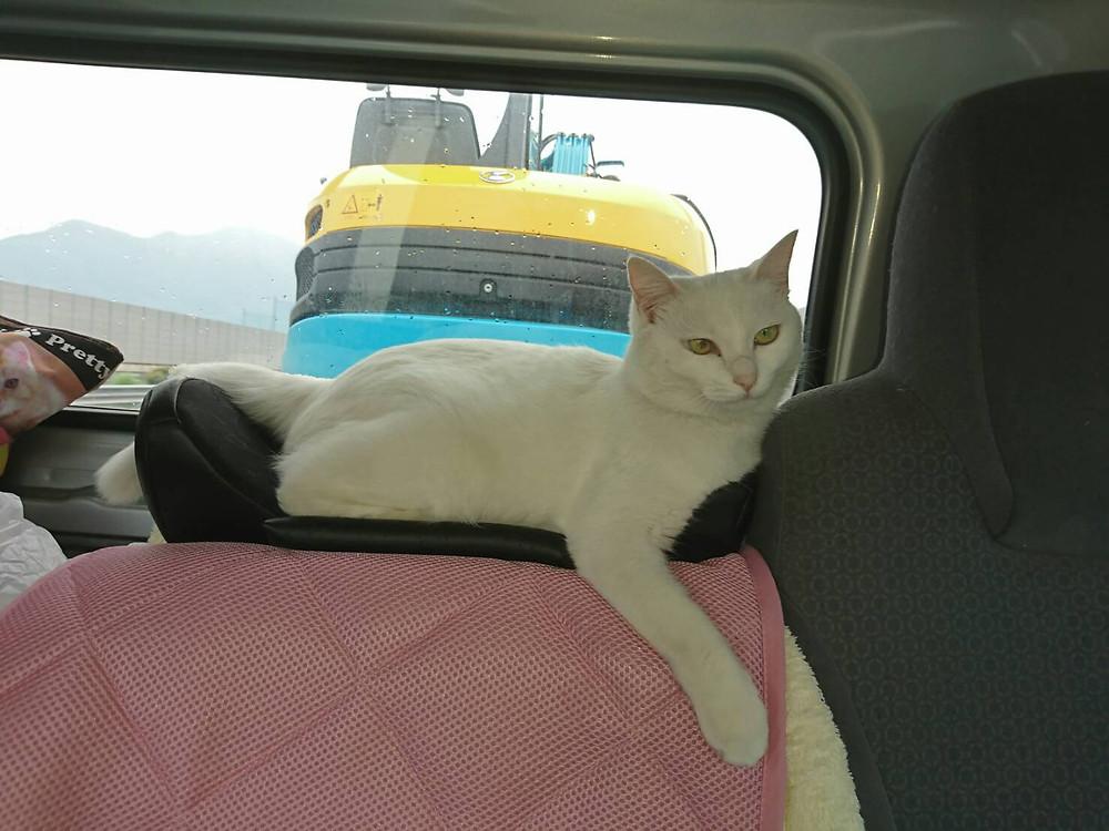 トラックの中のなっちゃん