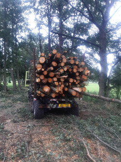Forest clearance projects
