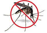 Contrôle biologique des insectes piqueurs
