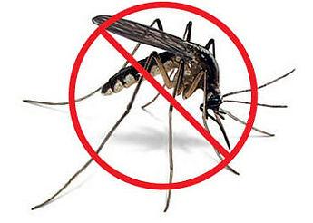 Contrôle insectes piqueurs moustique