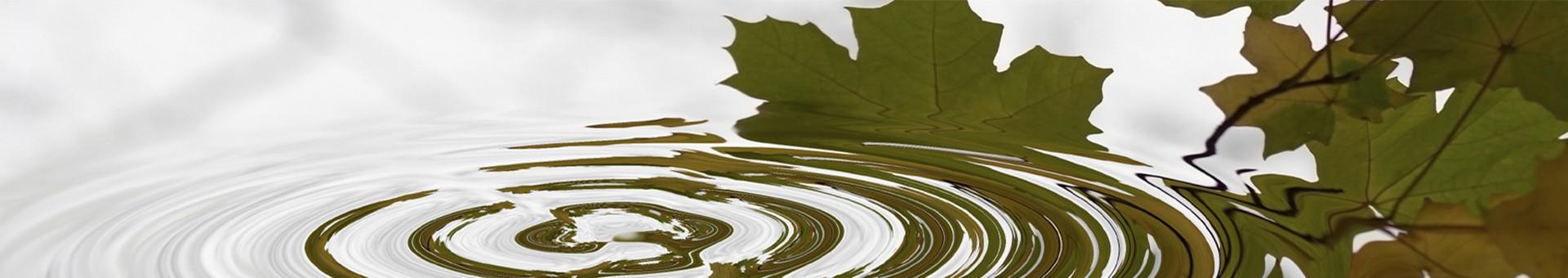 Image eau feuille goutte CFR