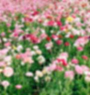 flower-farm-california-flower-farm-devon