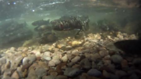 Waterfall Fish.mp4
