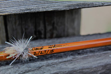 Bamboo Fly Rod, Fly, and Signature