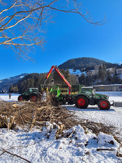 Baumschnitt / Forstarbeiten